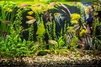Как выбрать аквариум: услада для глаз и дом для рыб