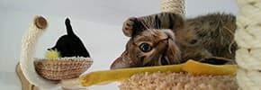 Цены на Аксессуары для кошек, фото