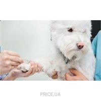 Фото Лицензия на ветеринарную практику