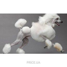 Фото Гигиеническая стрижка собак крупные породы