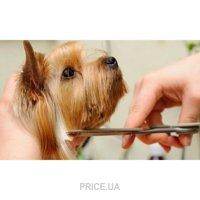 Фото Гигиеническая стрижка собак мелкие породы